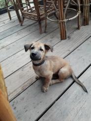 Island puppy :-)