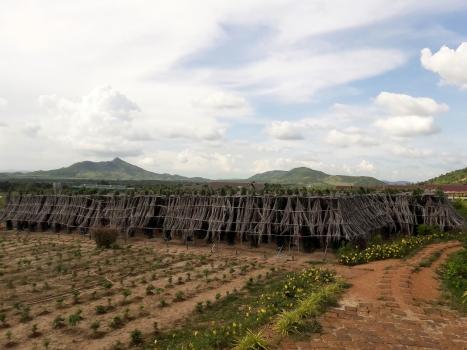 Pepper Plantation in Kampot