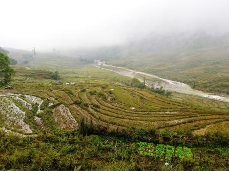 Paddy fields at Sapa