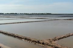 Salt fields near Kep in Cambodia